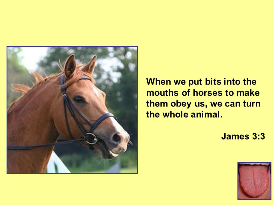 When we put bits into the mouths of horses to make them obey us, we can turn the whole animal. James 3:3