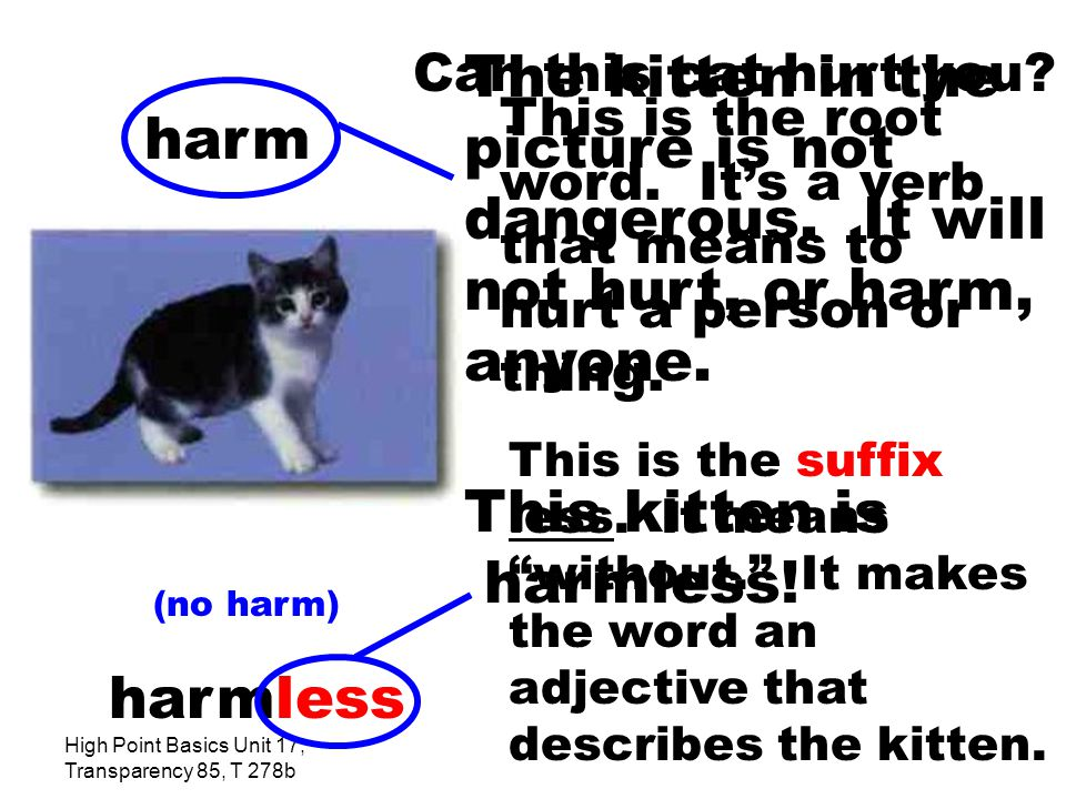 High Point Basics Unit 17, Transparency 85, T 278b The kitten in the picture is not dangerous.