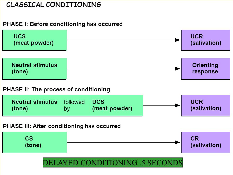 Fig6_3 07_ CLASSICAL CONDITIONING 02 PHASE III: After conditioning has occurred PHASE I: Before conditioning has occurred PHASE II: The process of conditioning Neutral stimulus (tone) Orienting response UCR (salivation) followed by UCS (meat powder) Neutral stimulus (tone) CS (tone) UCS (meat powder) CR (salivation) UCR (salivation) DELAYED CONDITIONING.5 SECONDS