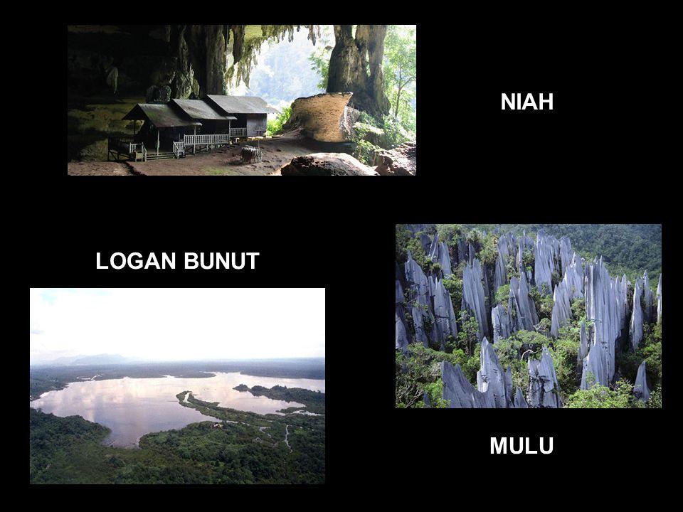 NIAH LOGAN BUNUT MULU
