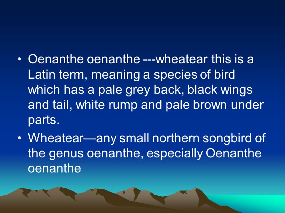 Oenanthe oenanthe ---wheatear this is a Latin term, meaning a species of bird which has a pale grey back, black wings and tail, white rump and pale brown under parts.