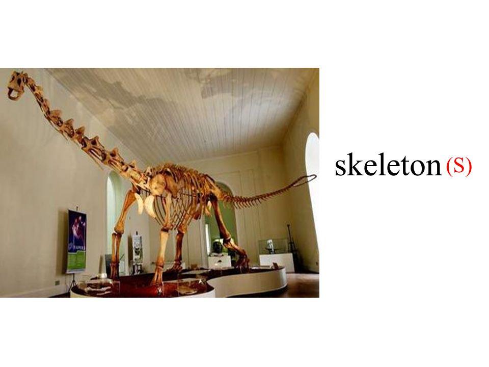skeleton (S)