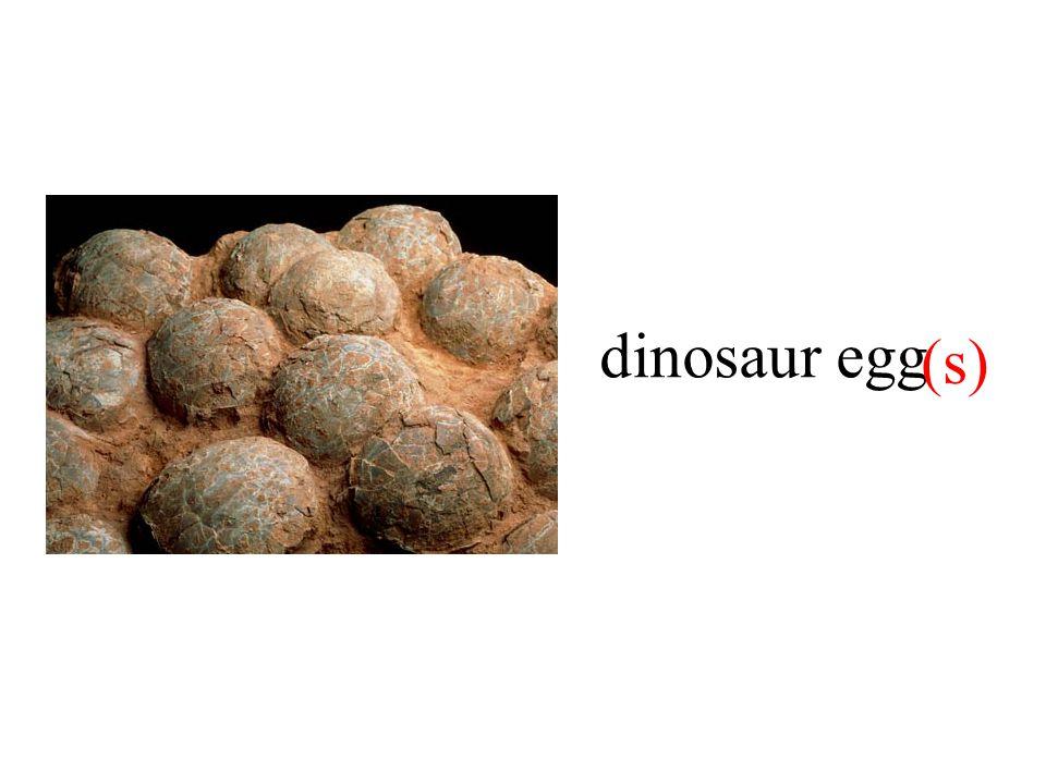 dinosaur egg (s)