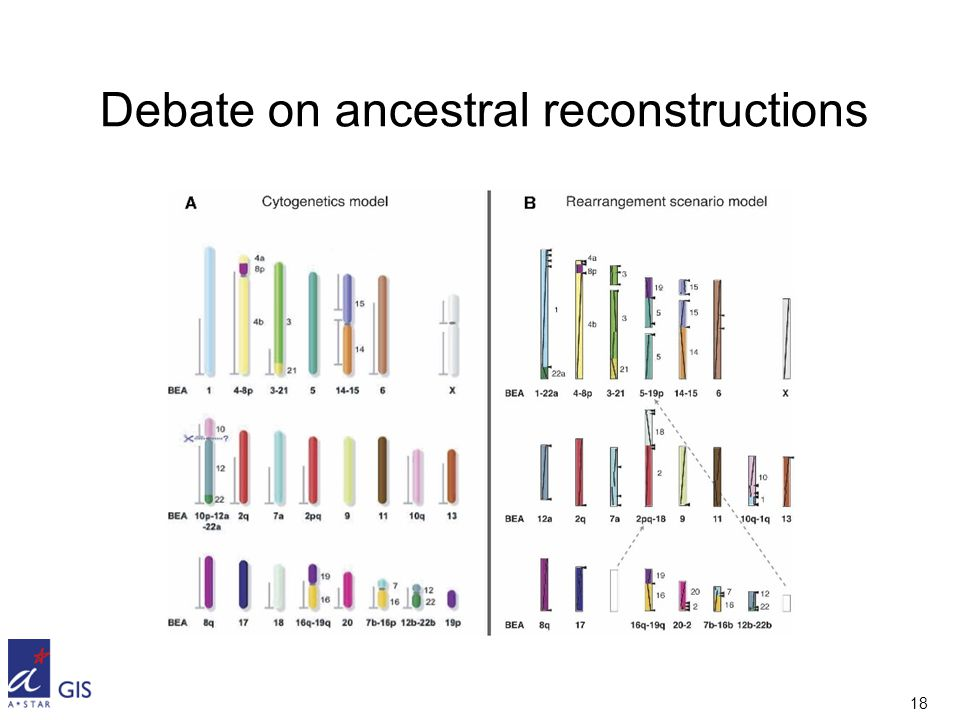 18 Debate on ancestral reconstructions