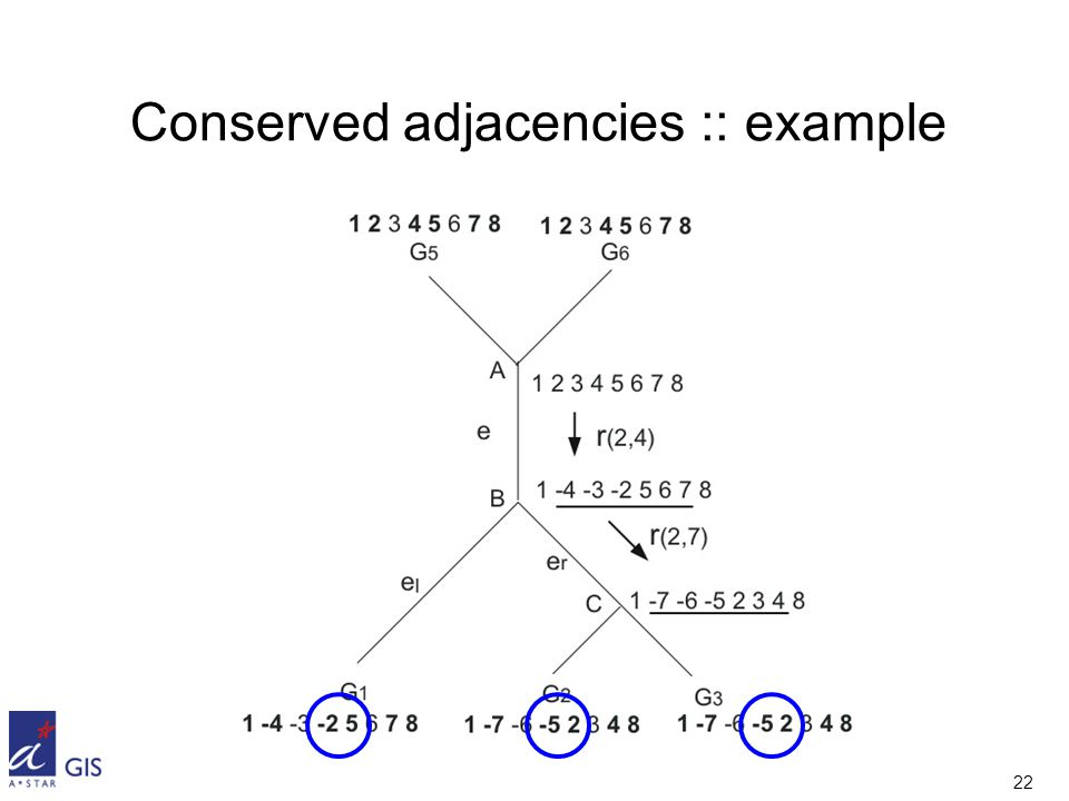 22 Conserved adjacencies :: example