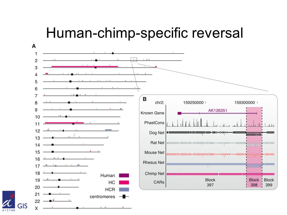 Human-chimp-specific reversal