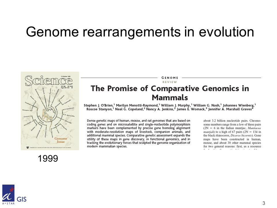 3 Genome rearrangements in evolution 1999