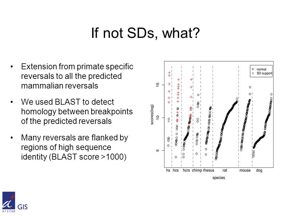 Extension from primate specific reversals to all the predicted mammalian reversals We used BLAST to detect homology between breakpoints of the predicted reversals Many reversals are flanked by regions of high sequence identity (BLAST score >1000) If not SDs, what