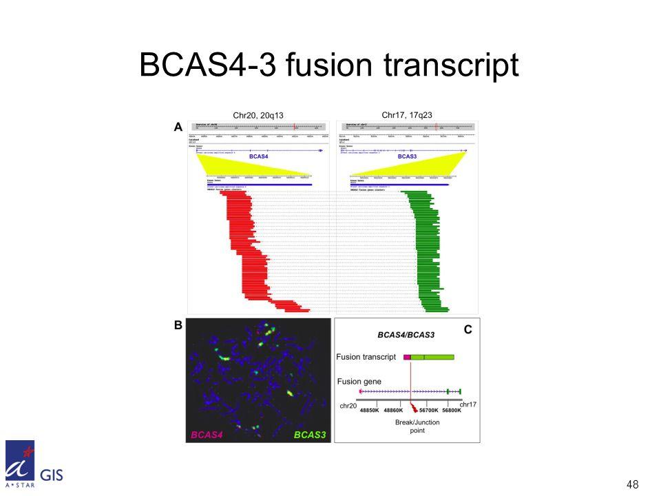 48 BCAS4-3 fusion transcript