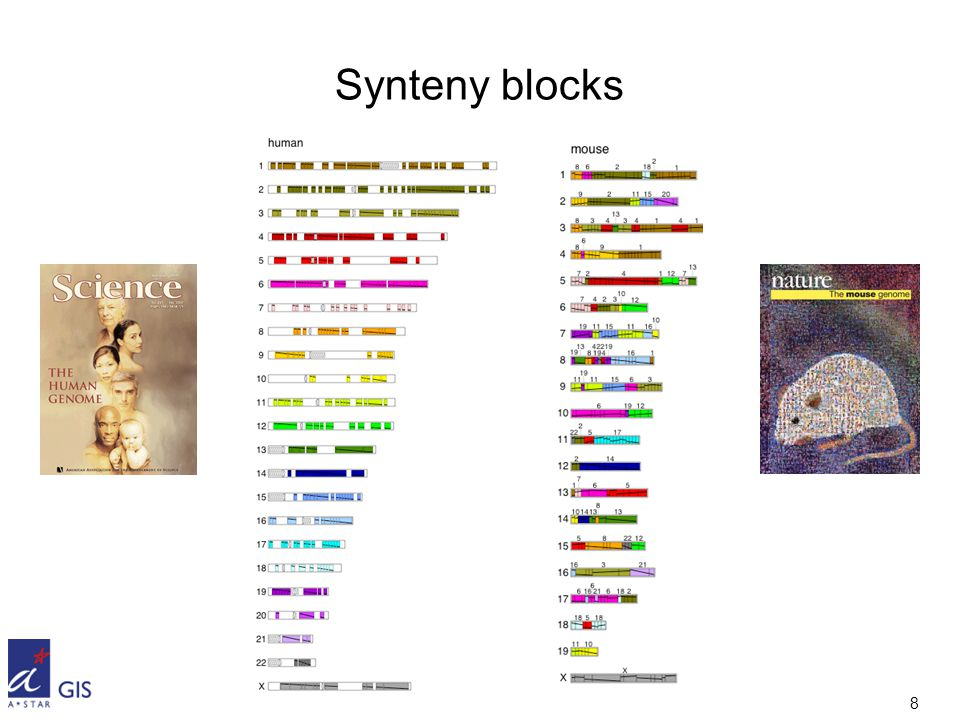 8 Synteny blocks