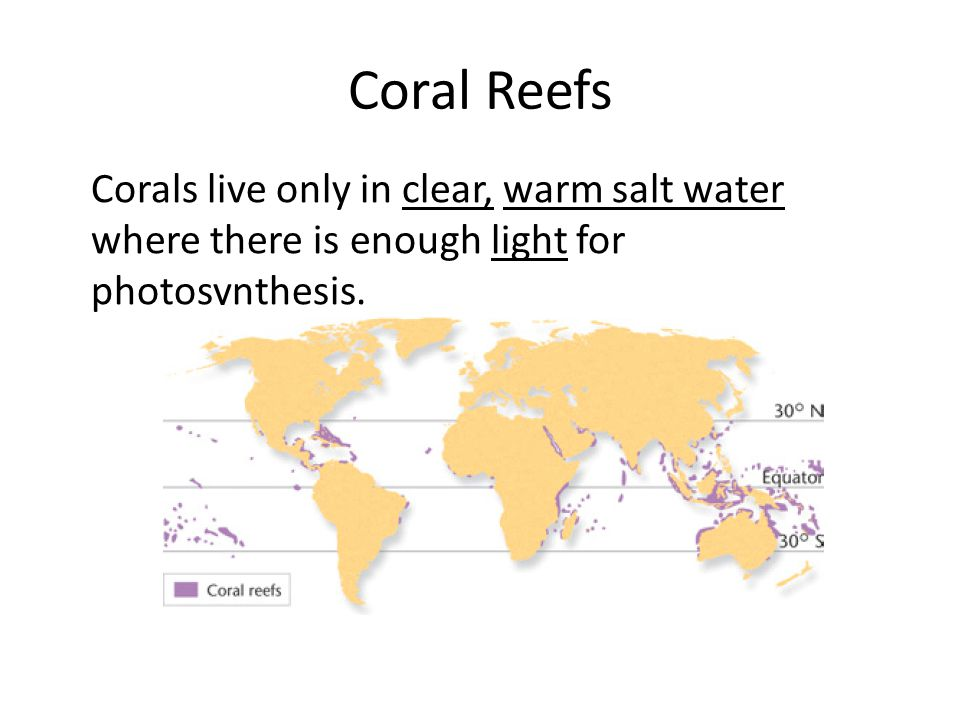 Coral Reefs Corals live only in clear, warm salt water where there is enough light for photosynthesis.