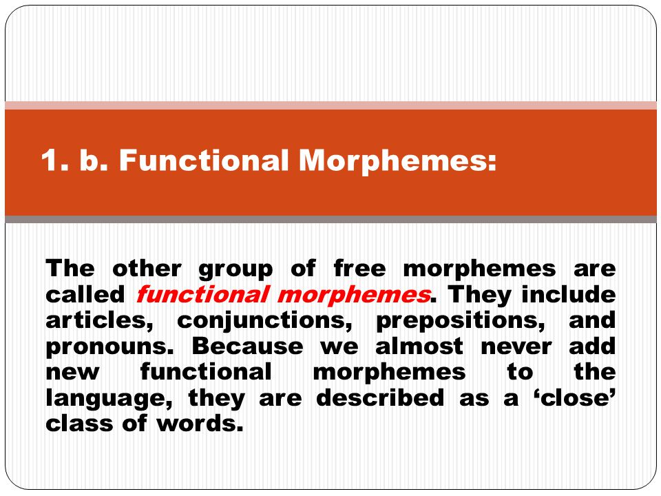 The other group of free morphemes are called functional morphemes. They include articles, conjunctions, prepositions, and pronouns. Because we almost