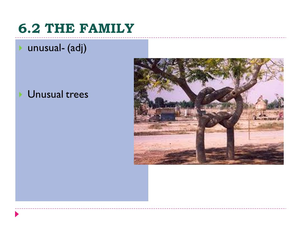 6.2 THE FAMILY  unusual- (adj)  Unusual trees