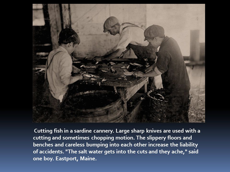 Cutting fish in a sardine cannery.
