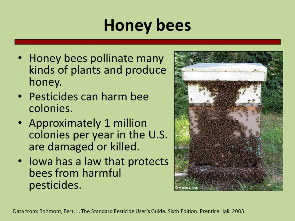 Honey bees Honey bees pollinate many kinds of plants and produce honey.