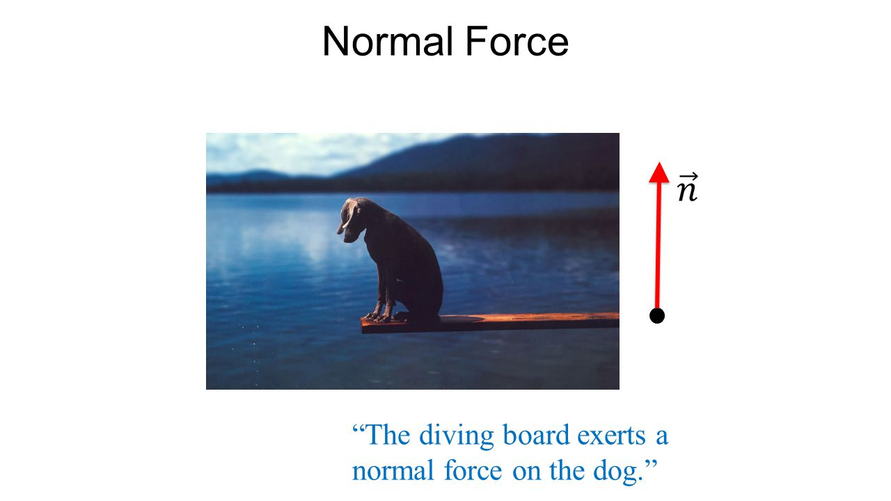 """Normal Force """"The diving board exerts a normal force on the dog."""""""