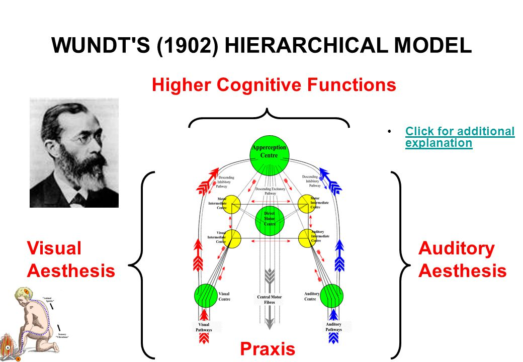 WILLIAM JAMES' (1890) HIERARCHICAL MODEL Click for additional explanationClick for additional explanation AesthesisPraxis Higher Cognitive Functions