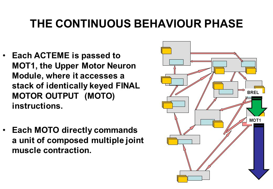 THE CONTINUOUS BEHAVIOUR PHASE The essence of safe HAND-EYE COORDINATION is that the SEEK NEXT INPUT facility now has to be focally directed to the attentional patient of the MOTOR SCHEMA at hand, thus.....