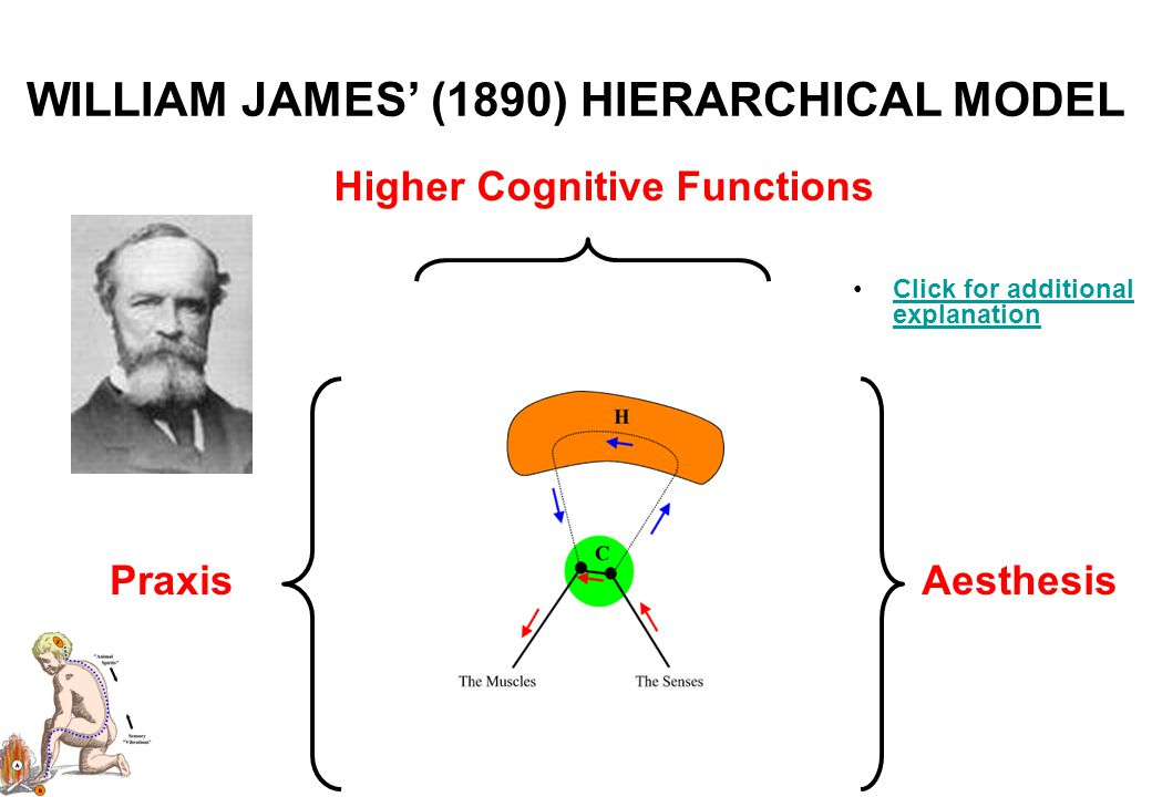 HIERARCHICAL MODELS Neuropsychological theory has been routinely held back over the years by the fact that there has never been a universally accepted graphical method to help us analyse the flow of mental information during cognition.