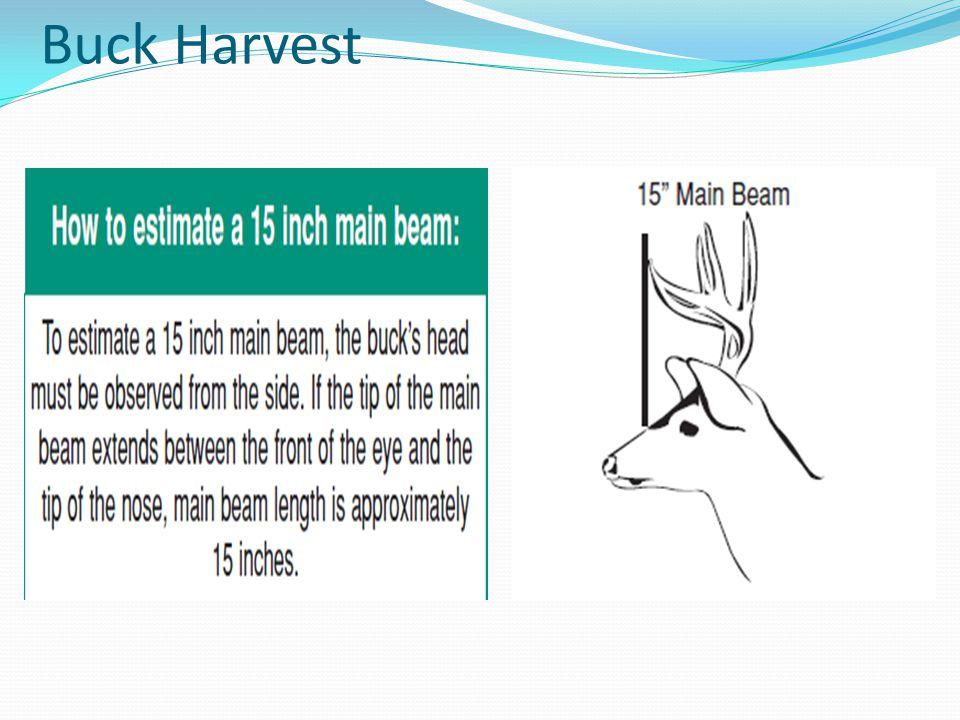 Buck Harvest