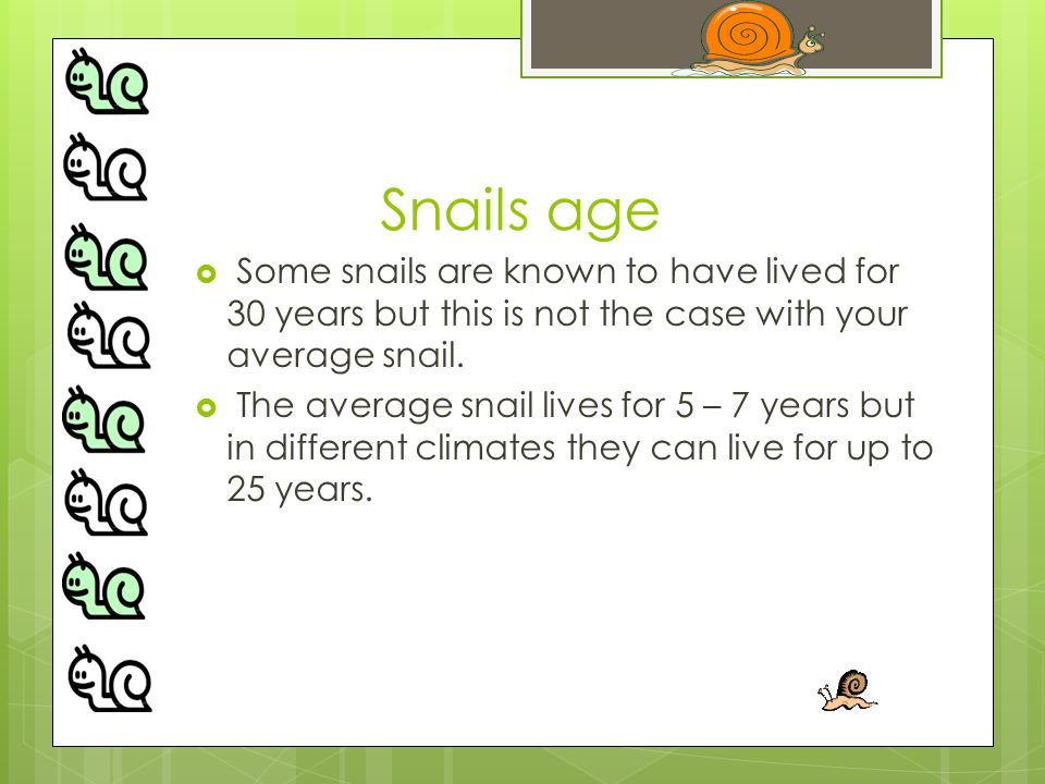 Snails age  Some snails are known to have lived for 30 years but this is not the case with your average snail.