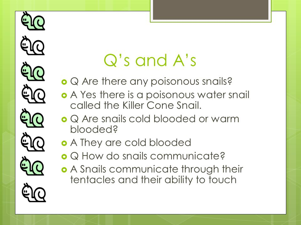 Q's and A's  Q Are there any poisonous snails.