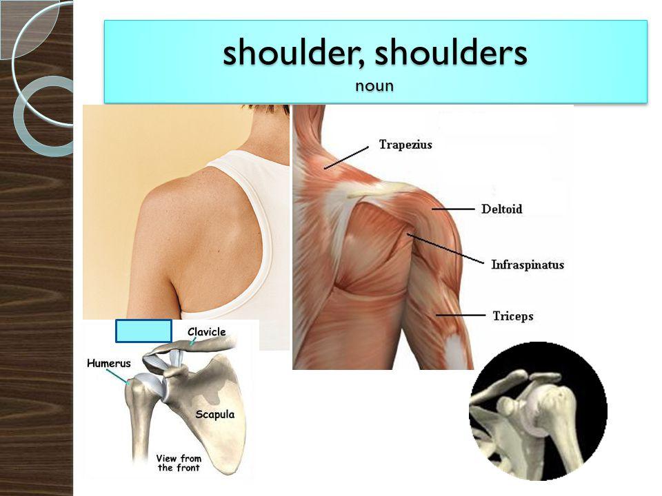 shoulder, shoulders noun