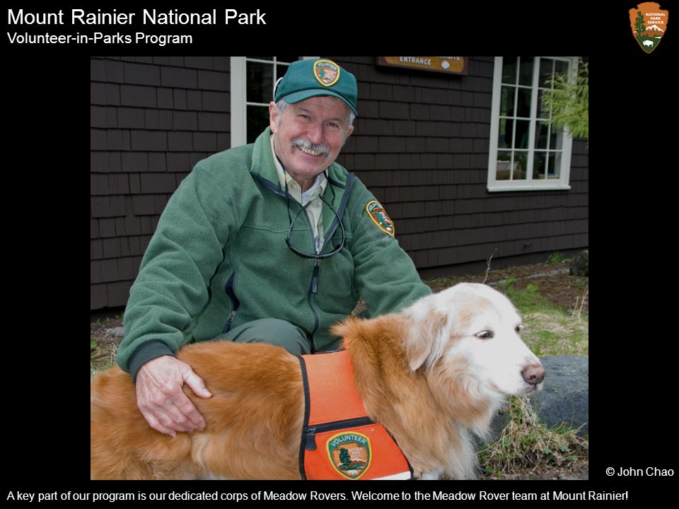 Mount Rainier National Park Volunteer-in-Parks Program A key part of our program is our dedicated corps of Meadow Rovers. Welcome to the Meadow Rover