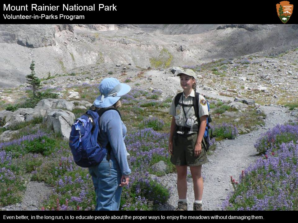 Mount Rainier National Park Volunteer-in-Parks Program Even better, in the long run, is to educate people about the proper ways to enjoy the meadows w