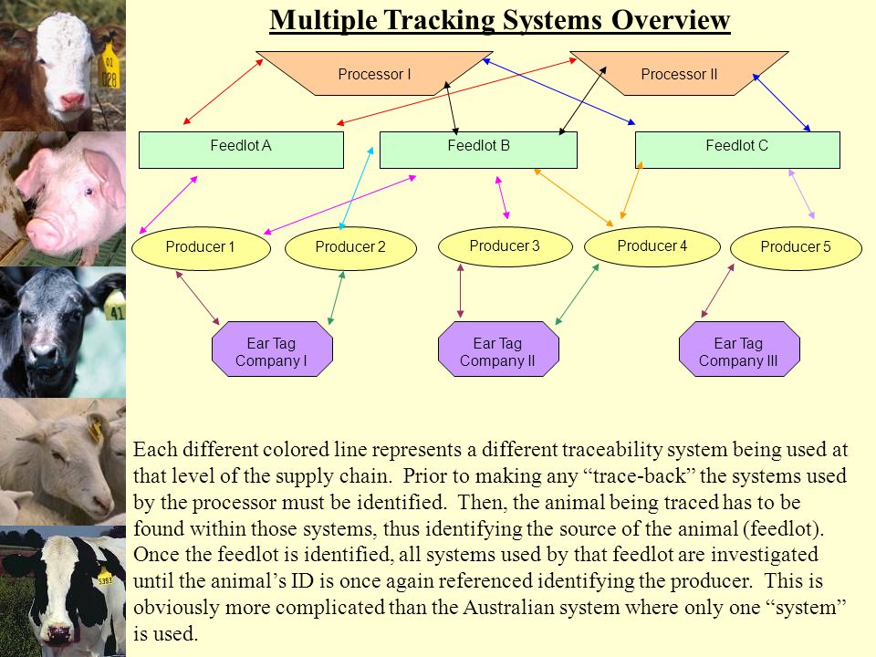 Producer 1Producer 2 Producer 3Producer 4 Producer 5 Ear Tag Company I Ear Tag Company II Ear Tag Company III Feedlot AFeedlot BFeedlot C Processor I Processor II Each different colored line represents a different traceability system being used at that level of the supply chain.