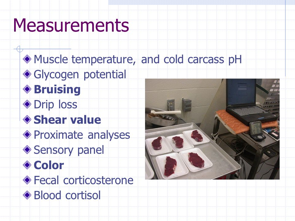 Measurements Muscle temperature, and cold carcass pH Glycogen potential Bruising Drip loss Shear value Proximate analyses Sensory panel Color Fecal corticosterone Blood cortisol