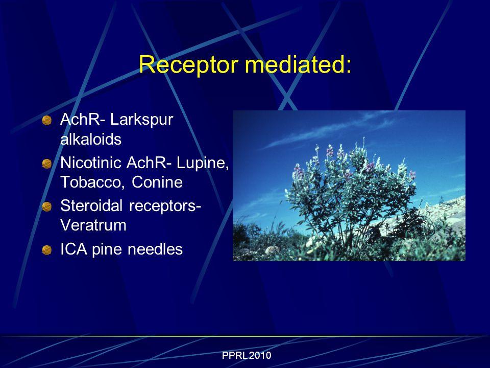 PPRL 2010 Receptor mediated: AchR- Larkspur alkaloids Nicotinic AchR- Lupine, Tobacco, Conine Steroidal receptors- Veratrum ICA pine needles