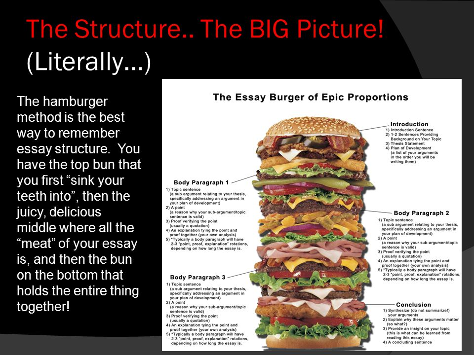 Informative essay hamburger model