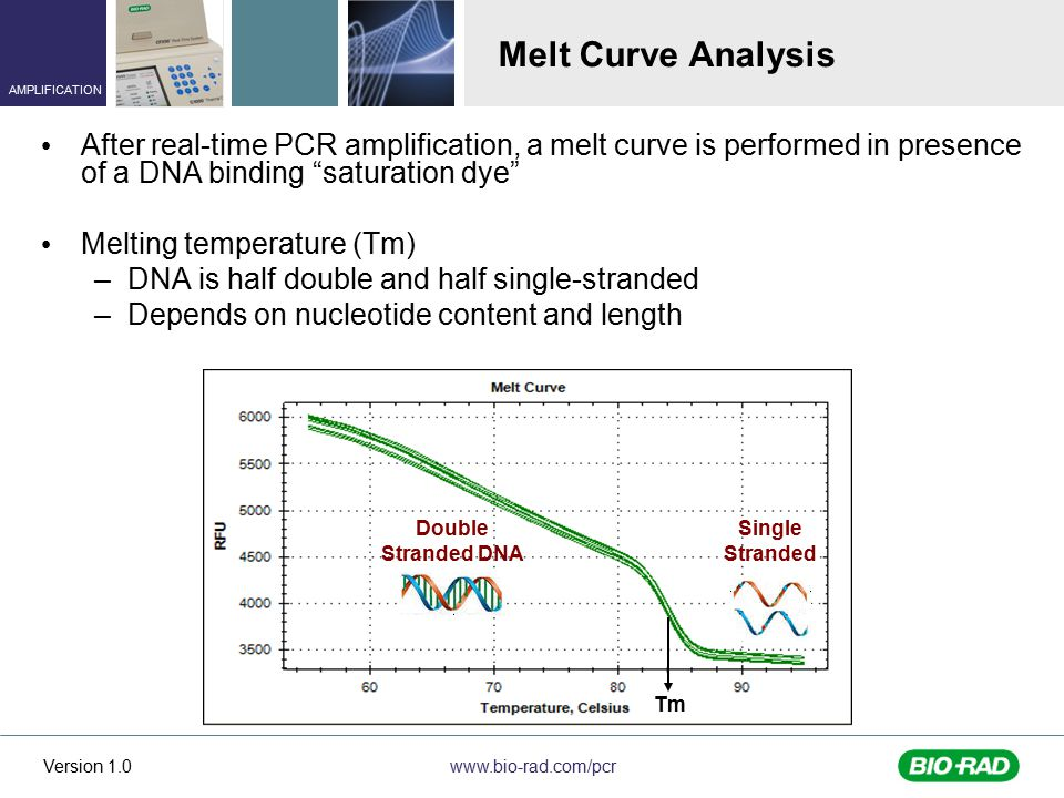 www.bio-rad.com/pcr AMPLIFICATION Version 1.0 Melt Curve Analysis After real-time PCR amplification, a melt curve is performed in presence of a DNA binding saturation dye Melting temperature (Tm) –DNA is half double and half single-stranded –Depends on nucleotide content and length Tm Double Stranded DNA Single Stranded