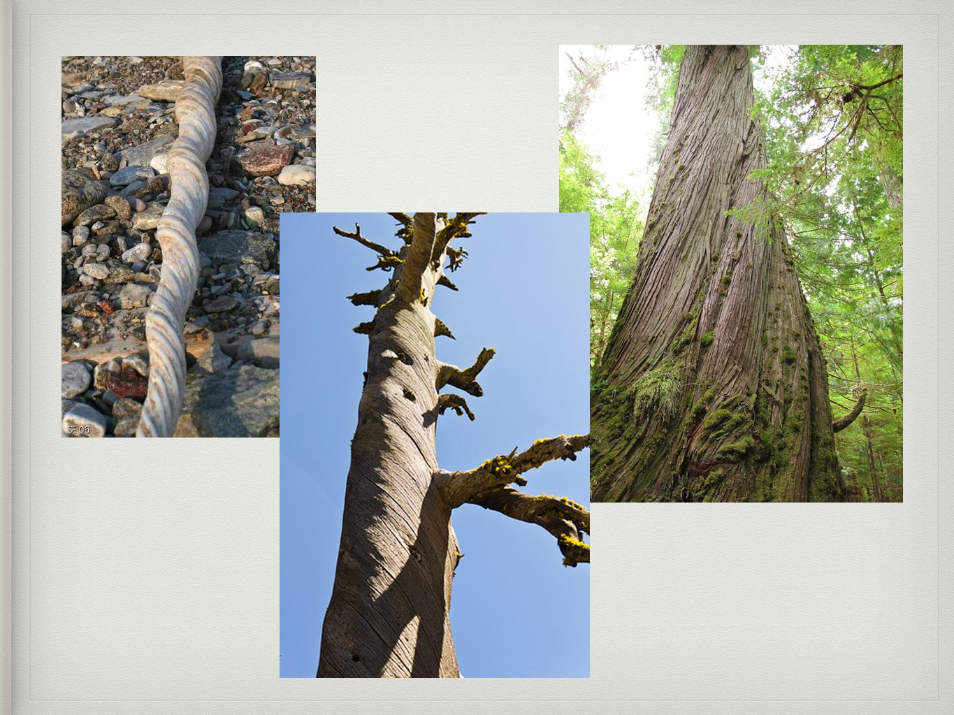 Summer and Fall Events: Life Transition Through the Lens of Nature .