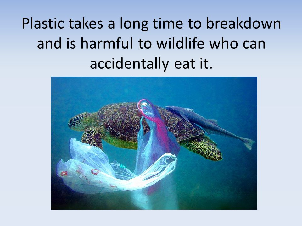 Plastic takes a long time to breakdown and is harmful to wildlife who can accidentally eat it.