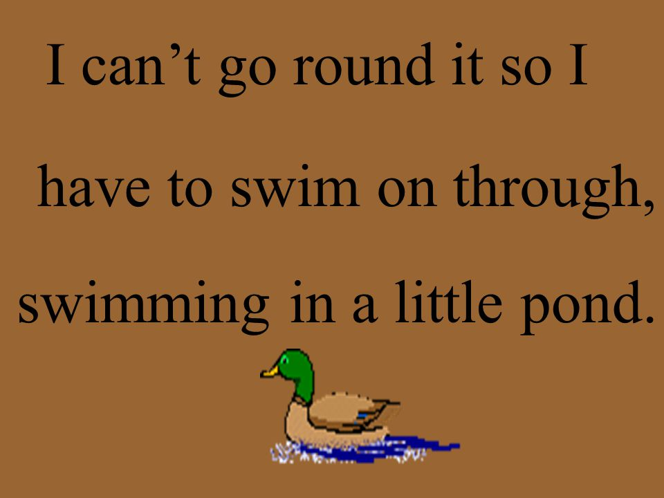 I can't go round it so I have to swim on through, swimming in a little pond.