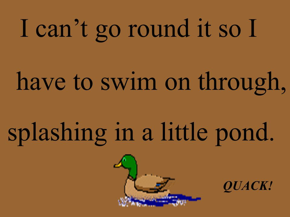 I can't go round it so I have to swim on through, splashing in a little pond. QUACK!