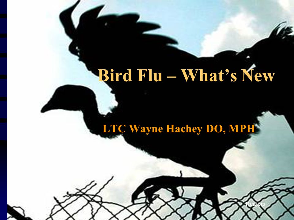 Bird Flu – What's New LTC Wayne Hachey DO, MPH Reuters