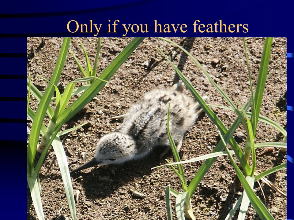 Only if you have feathers