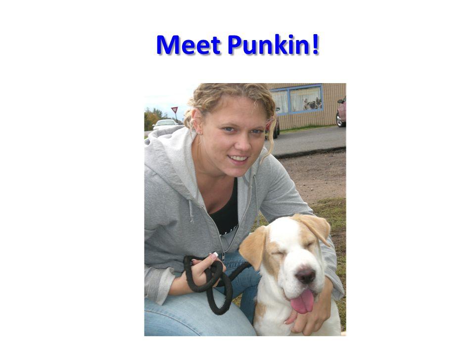 Meet Punkin!