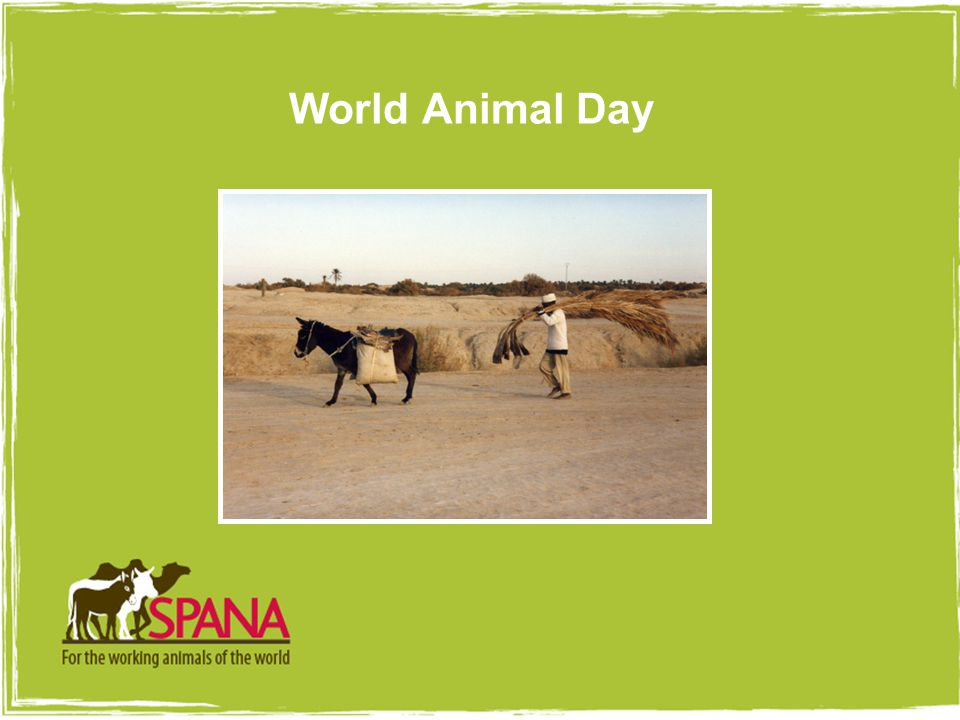 Picture goes here with 4pt white border World Animal Day