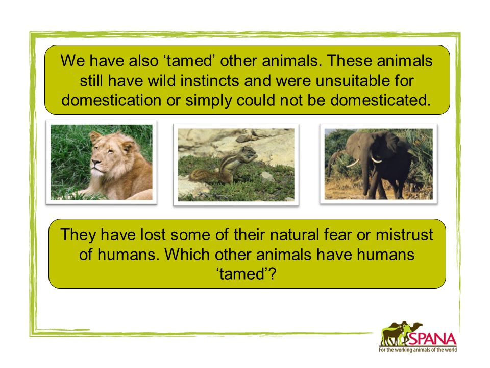 We have also 'tamed' other animals.