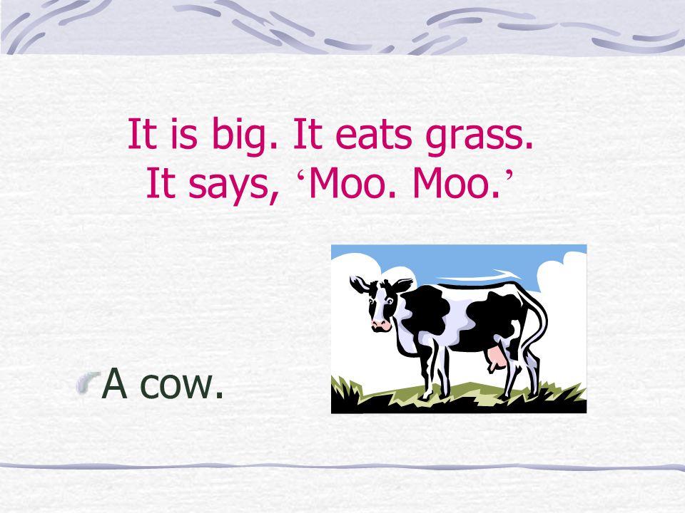 It is big. It eats grass. It says, ' Moo. Moo. ' A cow.