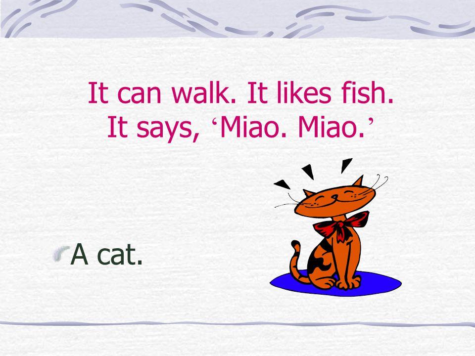 It can walk. It likes fish. It says, ' Miao. Miao. ' A cat.