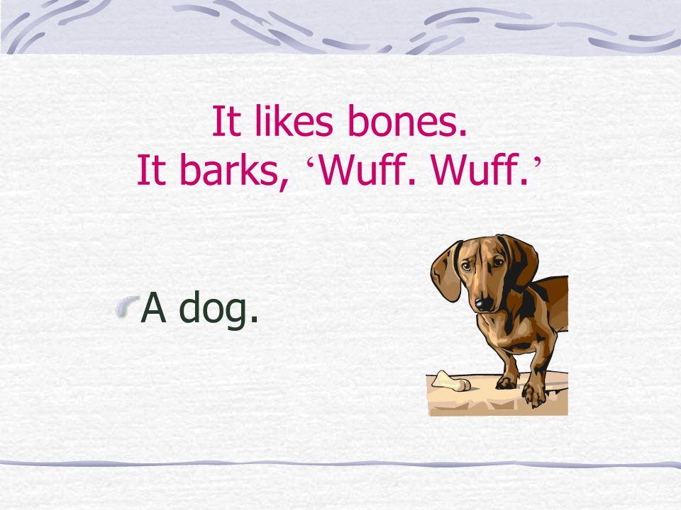 It likes bones. It barks, ' Wuff. Wuff. ' A dog.