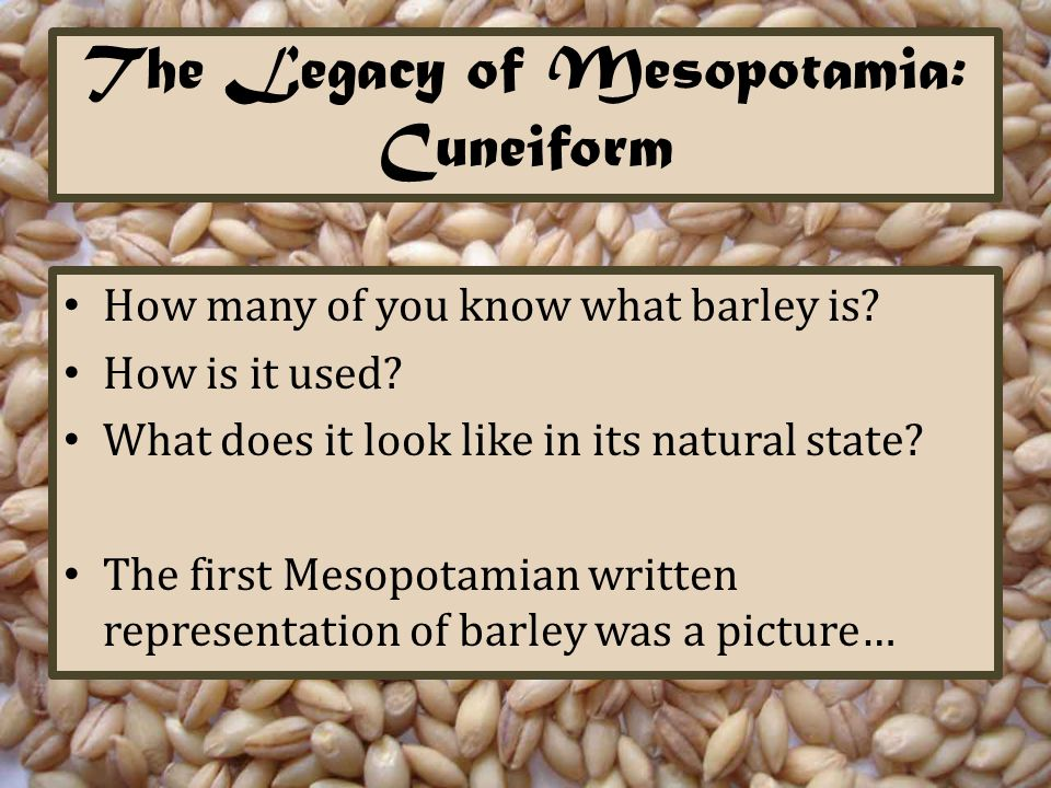 The Legacy of Mesopotamia: Cuneiform How many of you know what barley is? How is it used? What does it look like in its natural state? The first Mesop