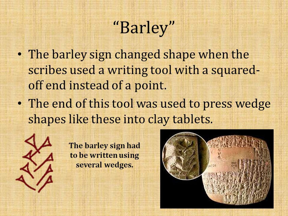 """""""Barley"""" The barley sign changed shape when the scribes used a writing tool with a squared- off end instead of a point. The end of this tool was used"""