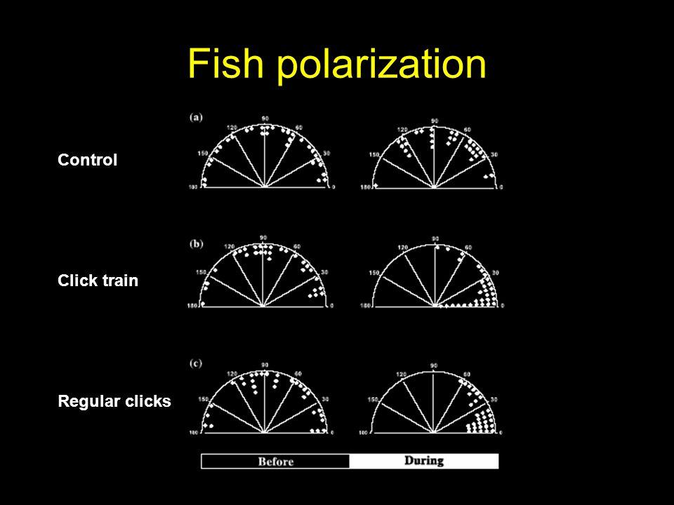 Fish polarization Control Click train Regular clicks