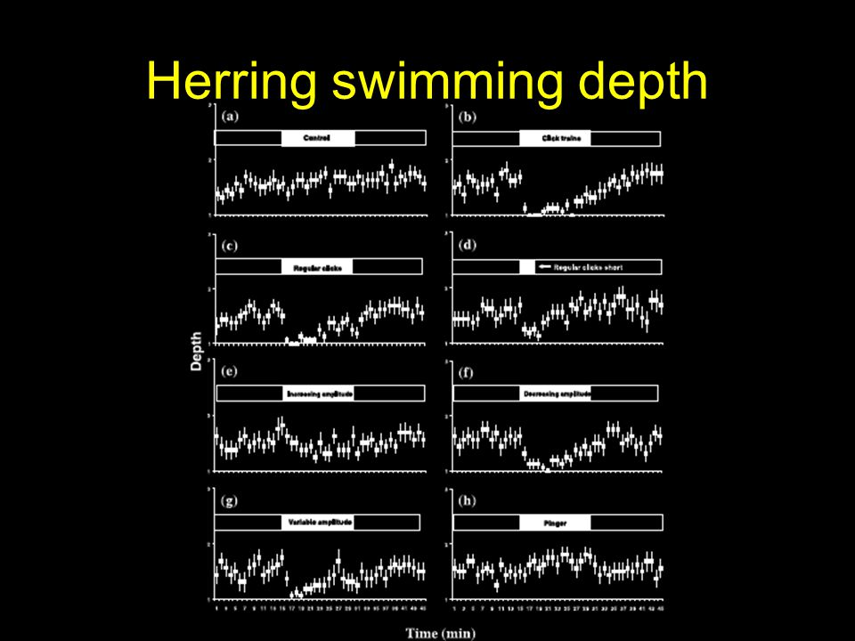 Herring swimming depth